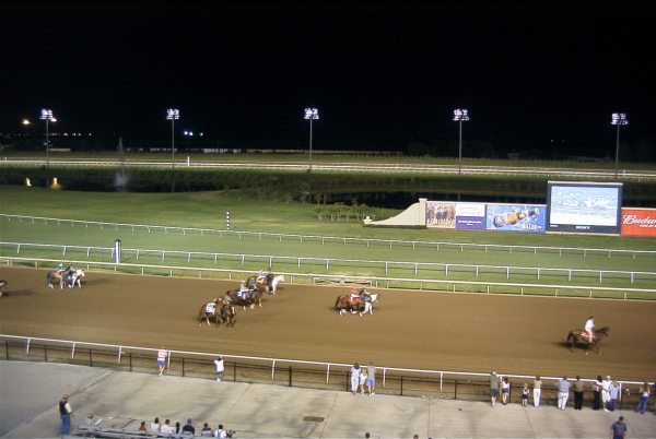 The horses limber up prior to the race start