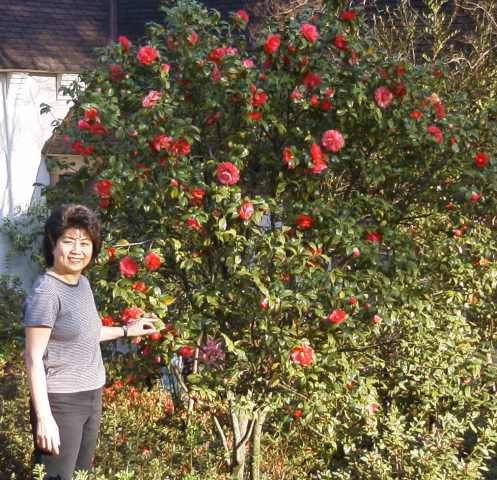 "Angie finds ""her"" Camellia bush"